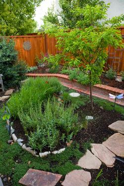 Backyard with Water Wise Landscaping